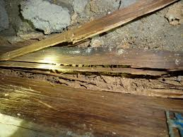Timber damage-Termites
