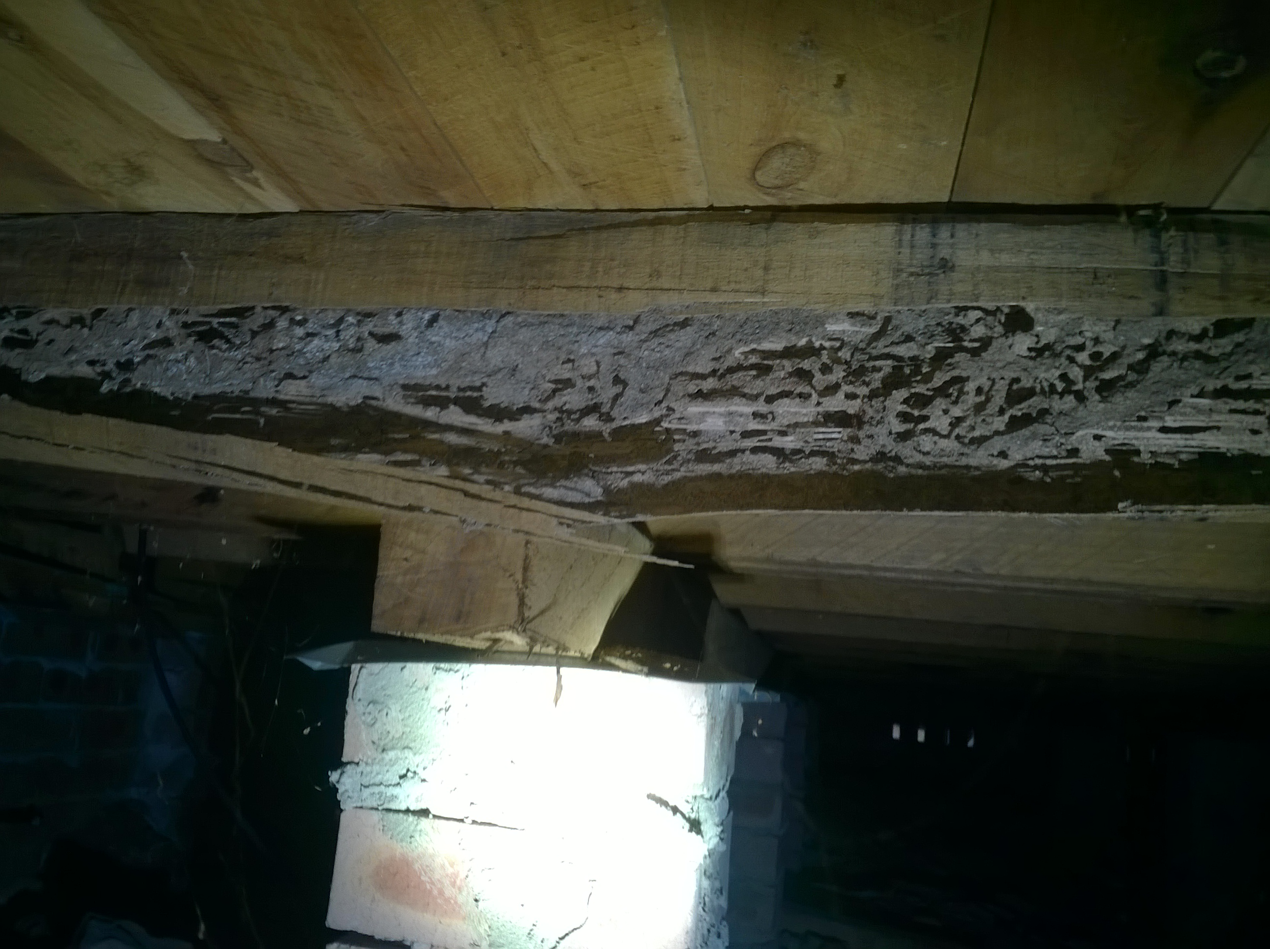 Damage by termites